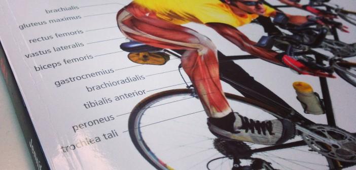 cykling og anatomi af jennifer laurita